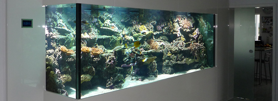 2500 Liter Meerwasser verbinden Lebens-Räume