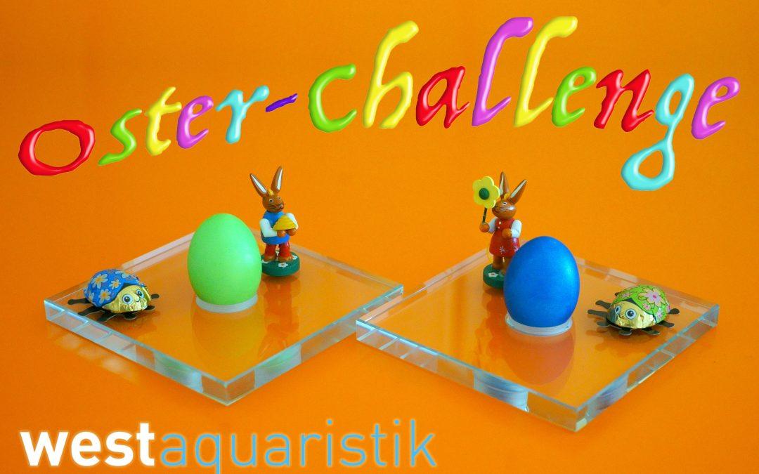 Mach mit: westaquaristik Oster-Challenge